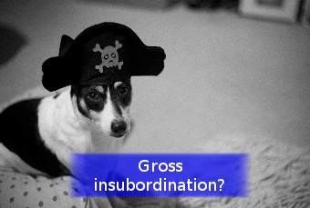 a dog with a pirate hat representing gross insubordination
